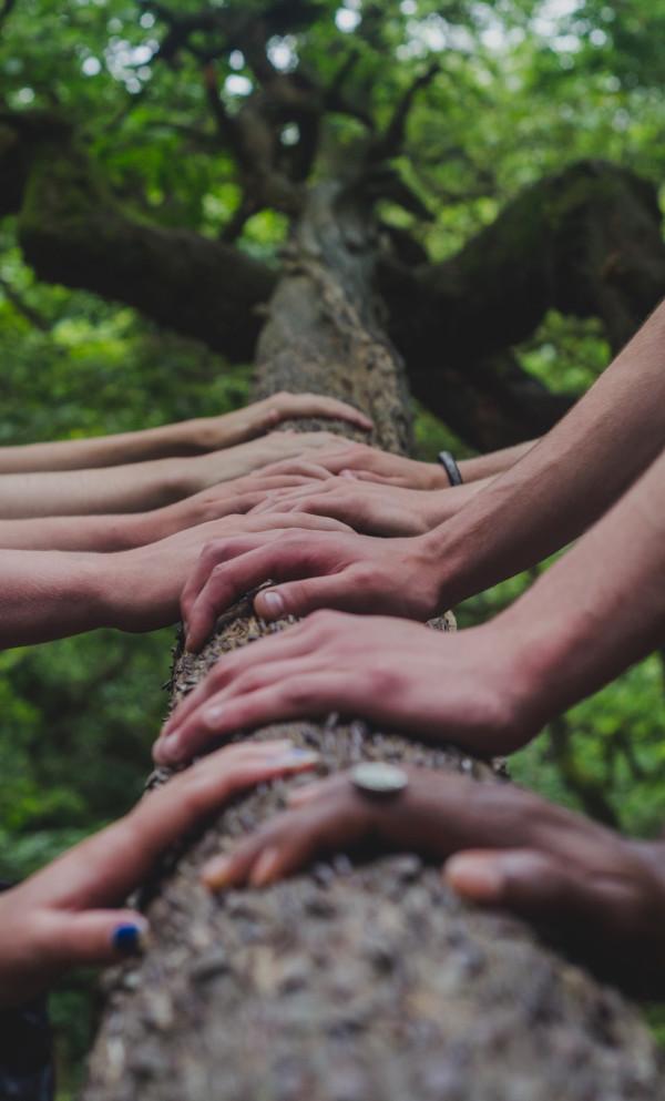 hands-ngo-tree-unsplash_600px